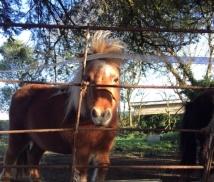 iow - pony