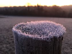 frost-1